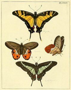 Φωτογραφία από το Biodiversity Heritage Librayr